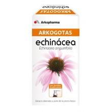 Arkogotas Echinacea